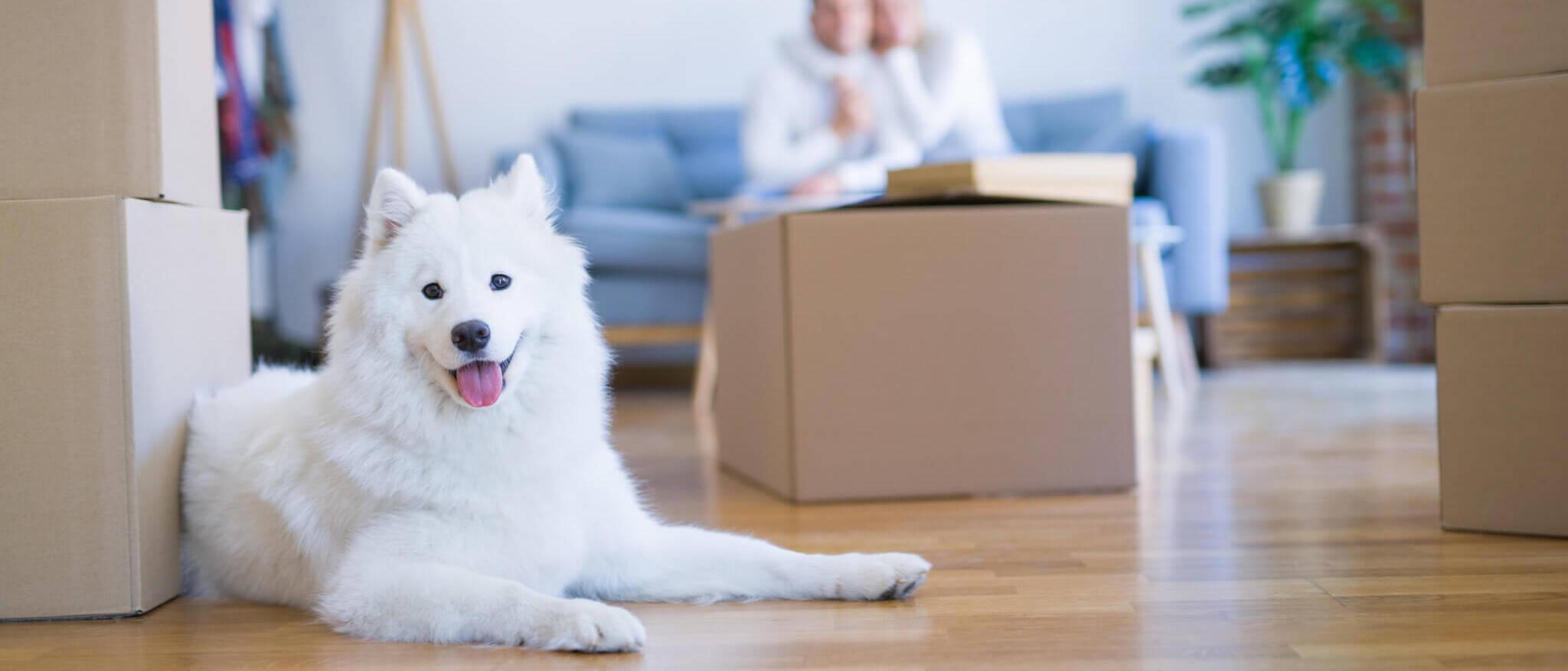 chien avec des cartons de déménagement